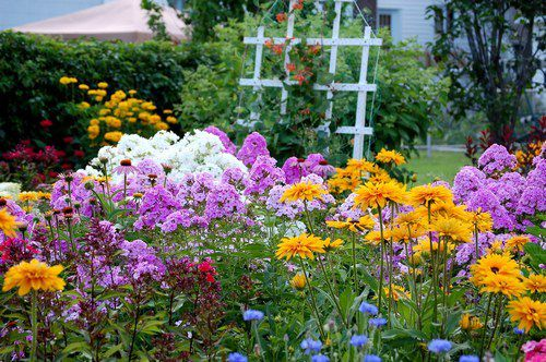 Jardin Ornemental - Fleurs avec Ignace