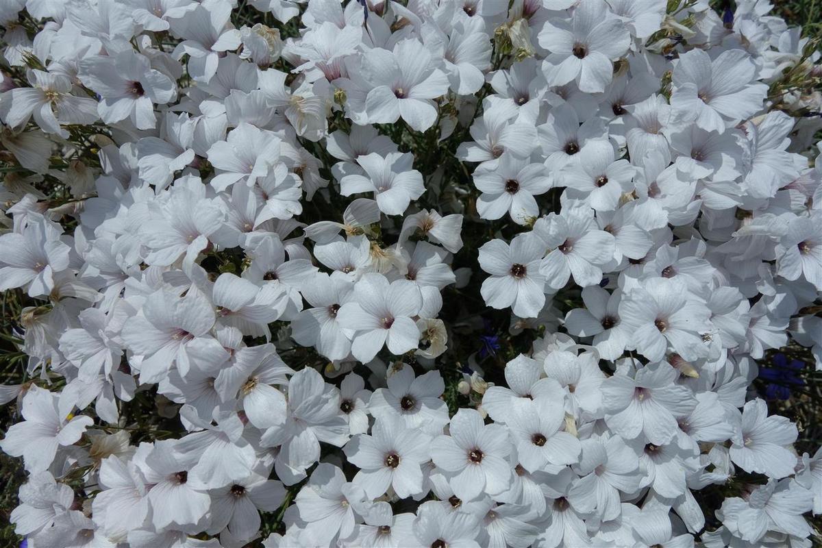 parterre de fleurs vers les Baous