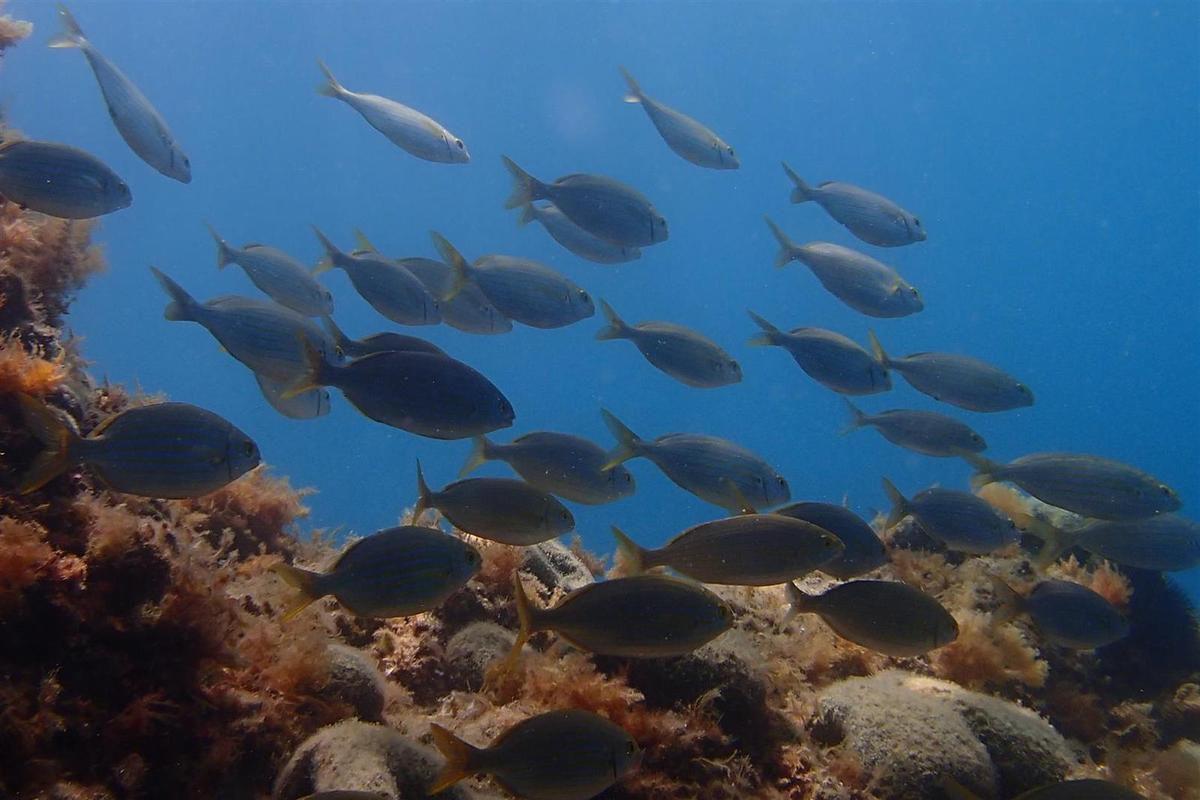sous les eaux, poulpe, saupes et anémones