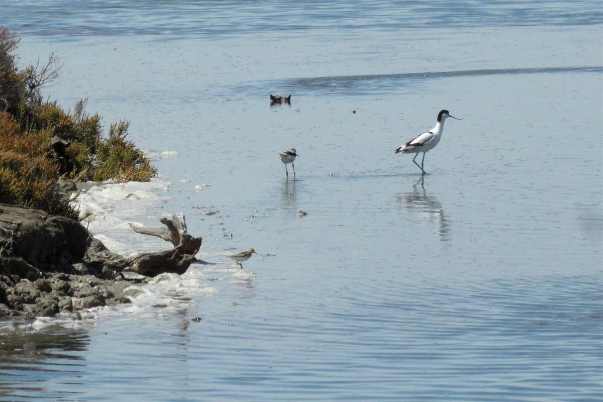 """les oiseaux du cru, dans leur environnement """"naturel"""" avec à l'horizon les raffineries de Port Saint-Louis"""