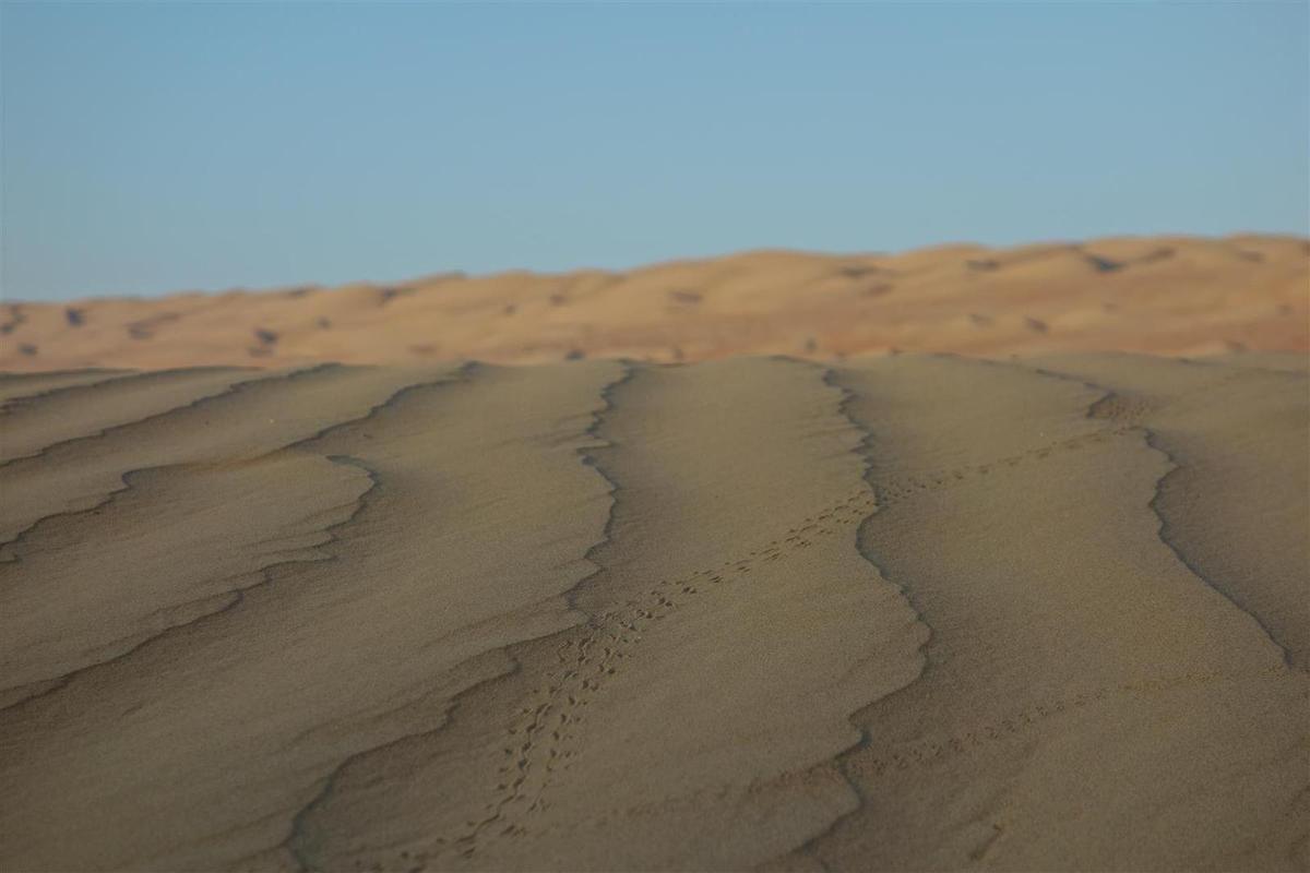 dans les eaux du désert