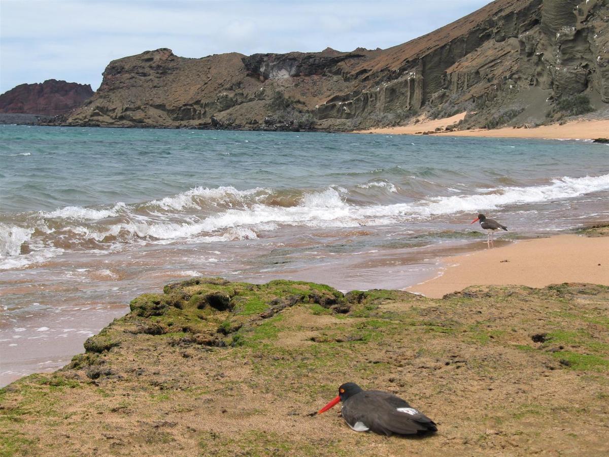 Galapagos,septembre 2006
