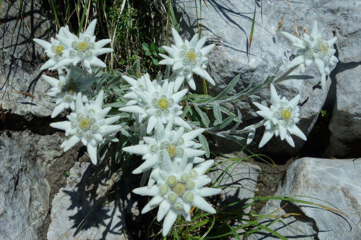 edelweiss au départ