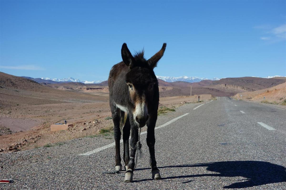 faune et paysages désertiques sur la route entre Ouarzazate et Taliouine