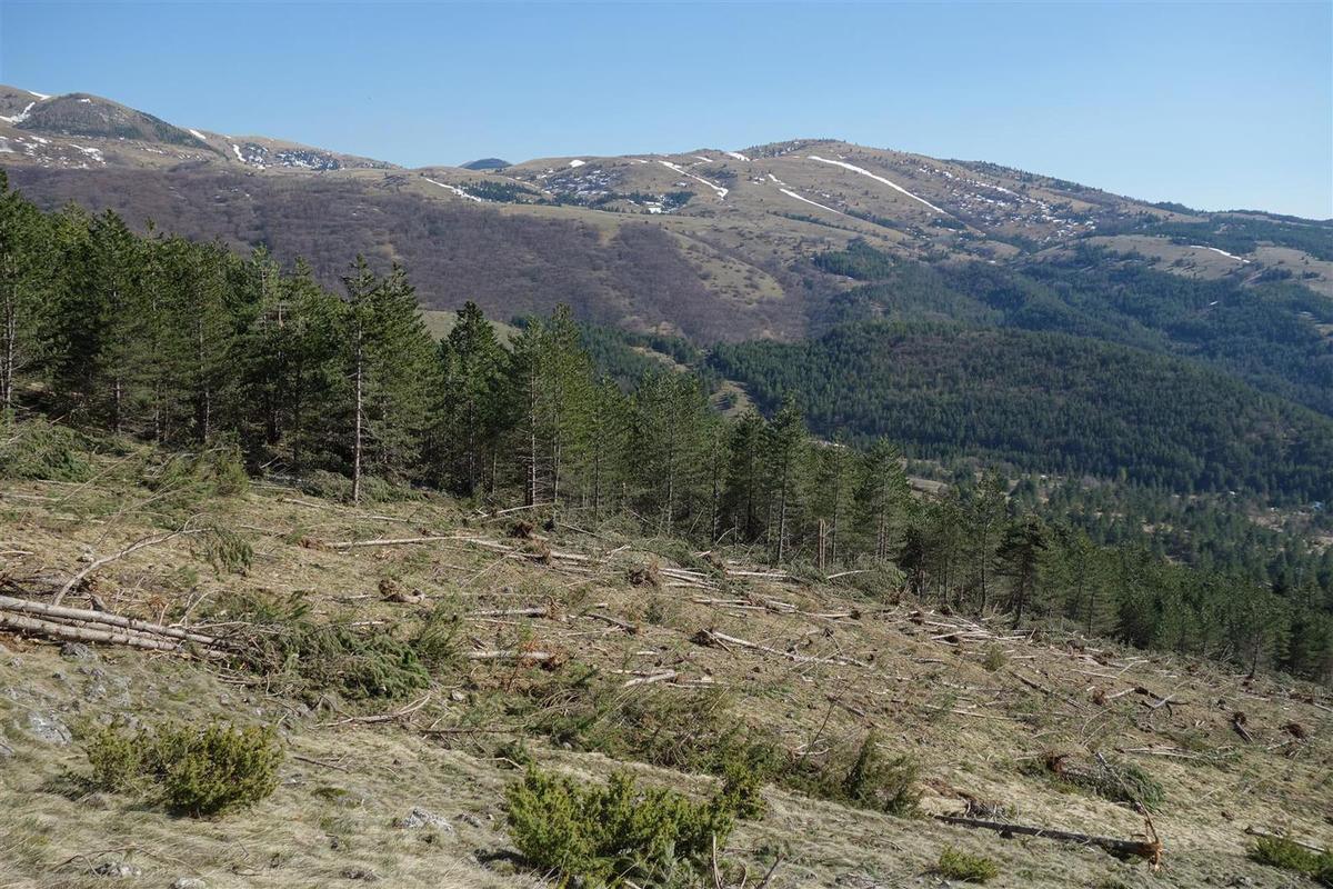 les stigmates des avalanches qui ont ravagé la forêt en janvier au-dessus de Fonte Cerreto