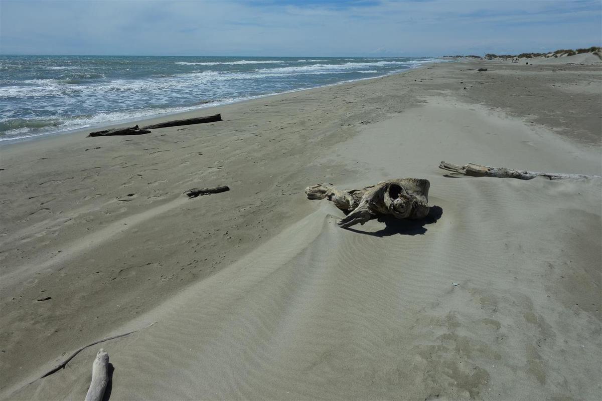 la plage Napoléon à Port Saint-Louis : une immense étendue de sable fin, peu fréquentée donc même au cœur de l'été, de quoi faire des châteaux de sable ou ramasser des tellines en famille !