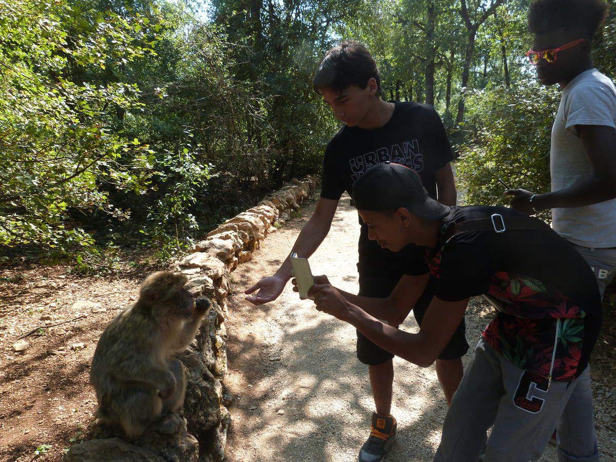 Fôret des singes, Rocamadour, septembre 2015 : Harouna, Larry, Marouane, Nicolas