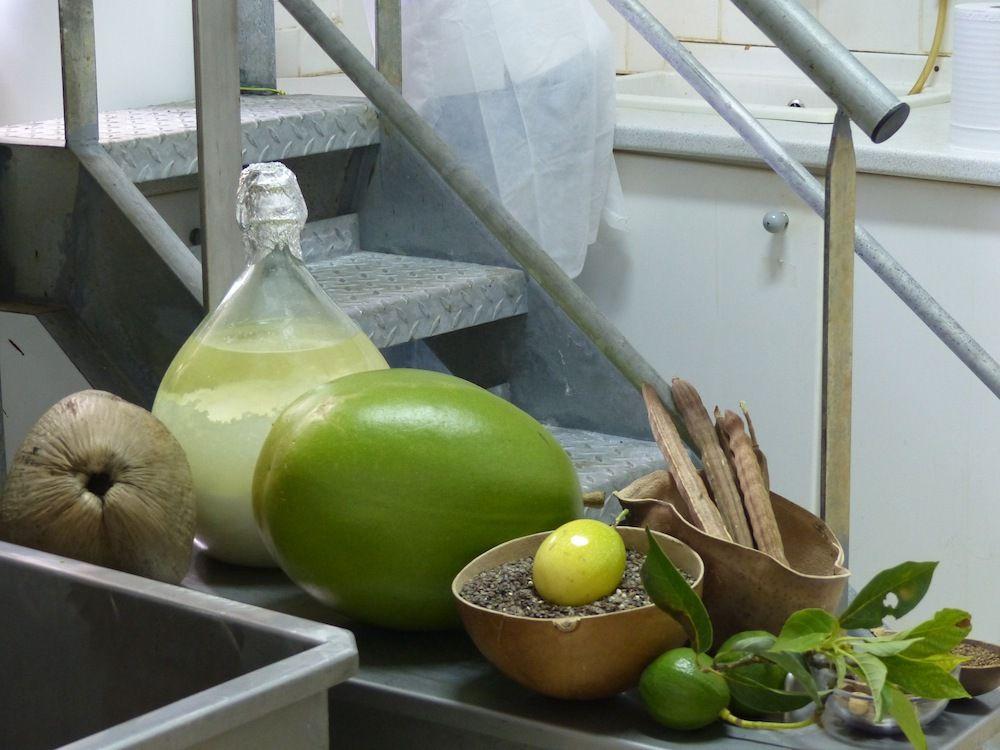 Cocos, calebasses, citrons, plantes près de la maison.