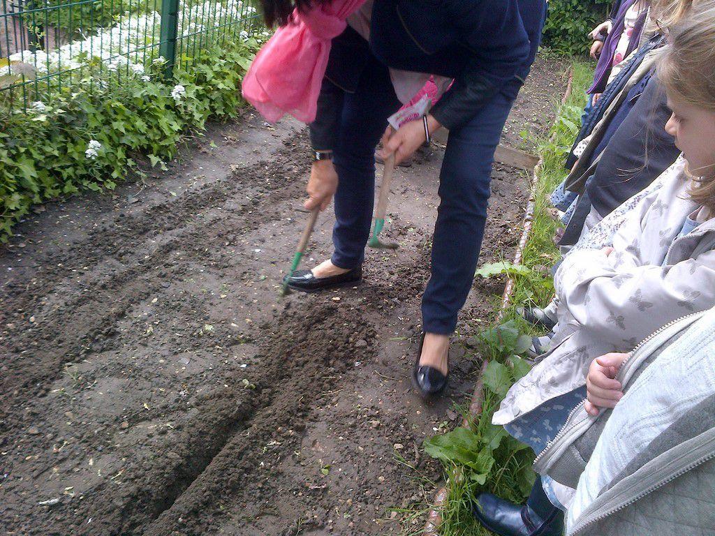 Jardinage chez les moyens