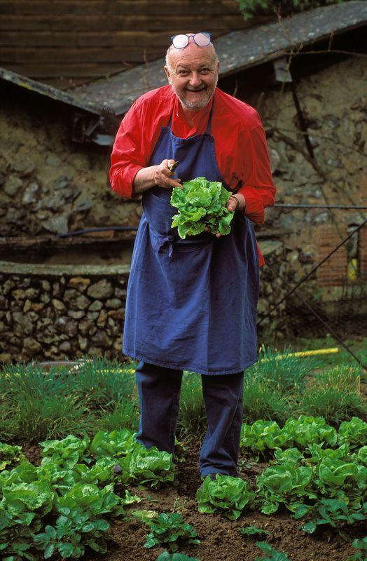 Ancien potager, récolte de salades