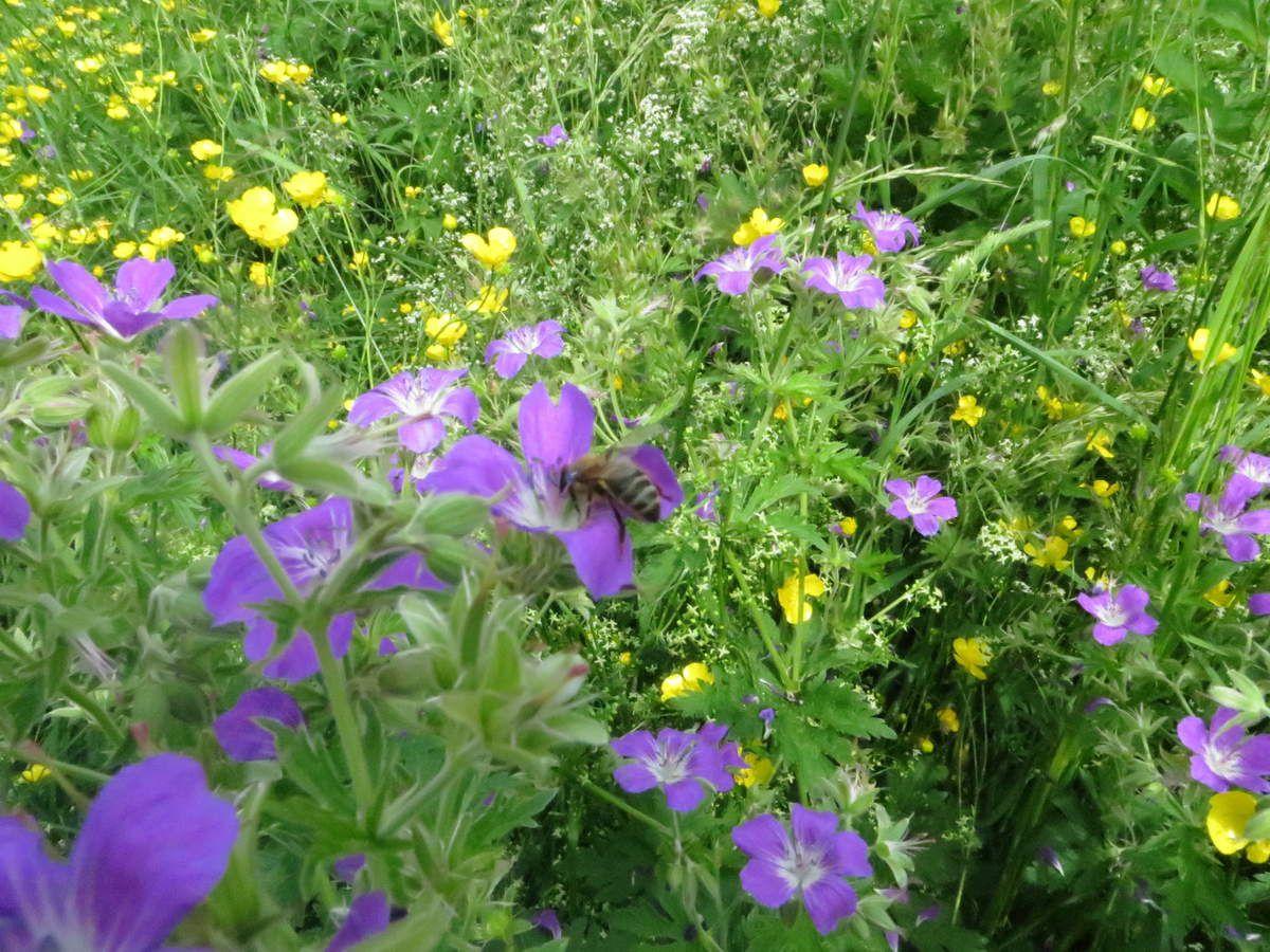 herbier, cueillette et reconnaissance