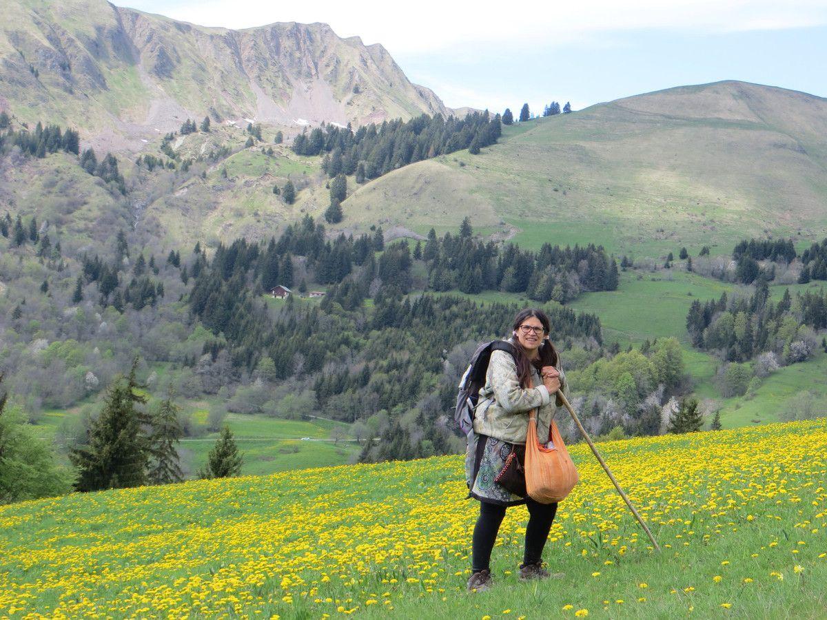 cueillette de primevère dans le massif des Aravis