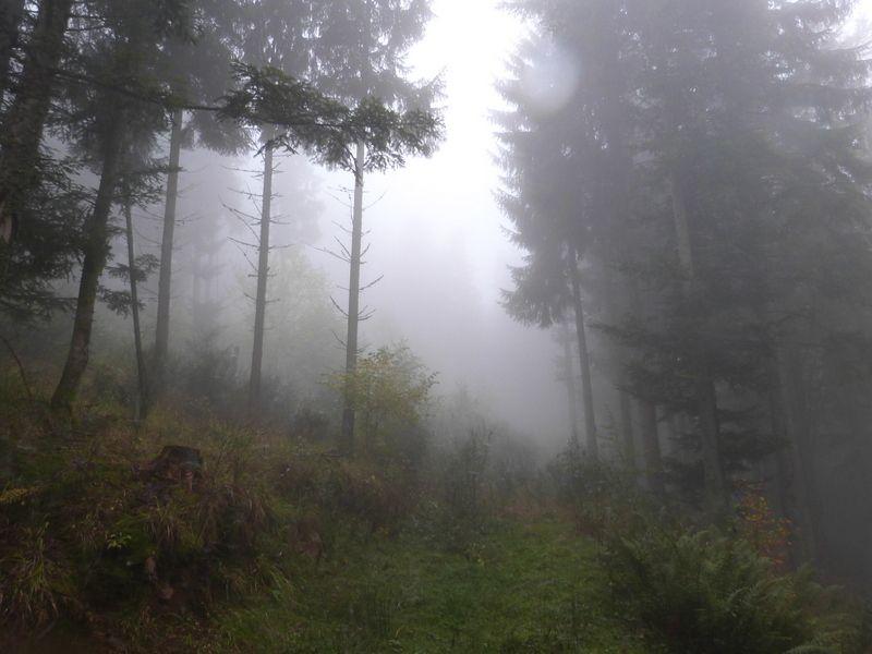Forêt vosgienne dans la brume