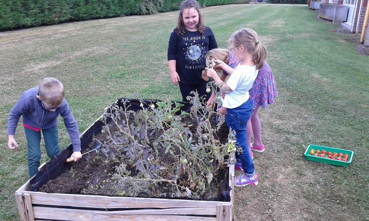 Au début de l'année, nous avons récolté les tomates que nous avions plantées au mois de juin. Il y en avait 24, ainsi qu'une courgette.