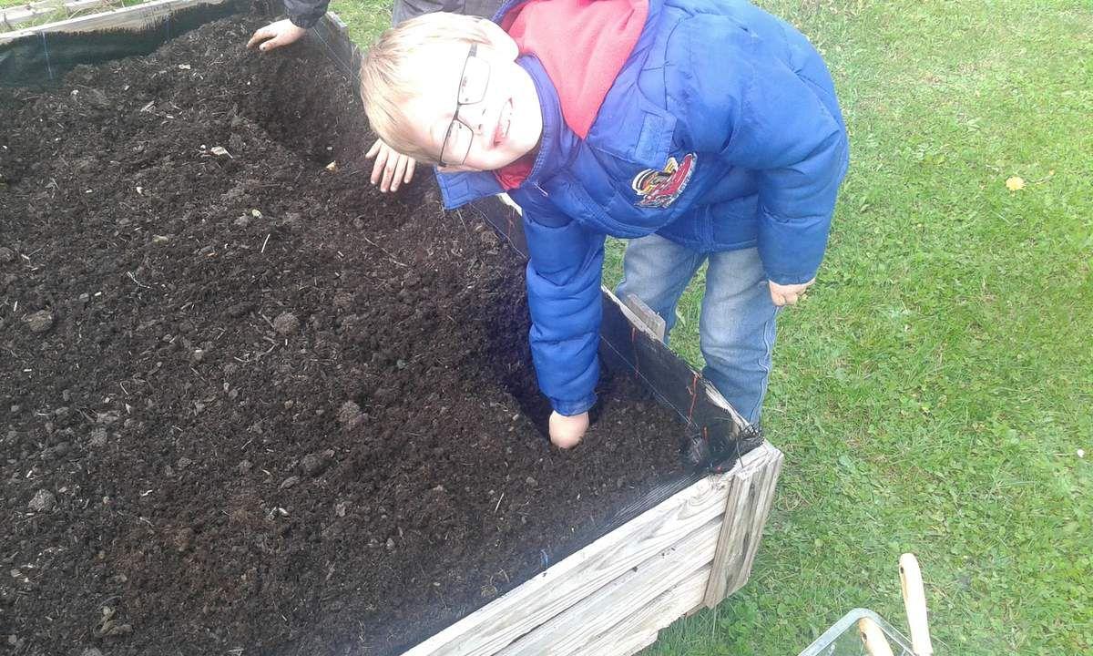 Nous avons aussi planté des bulbes de tulipes et de narcisses.