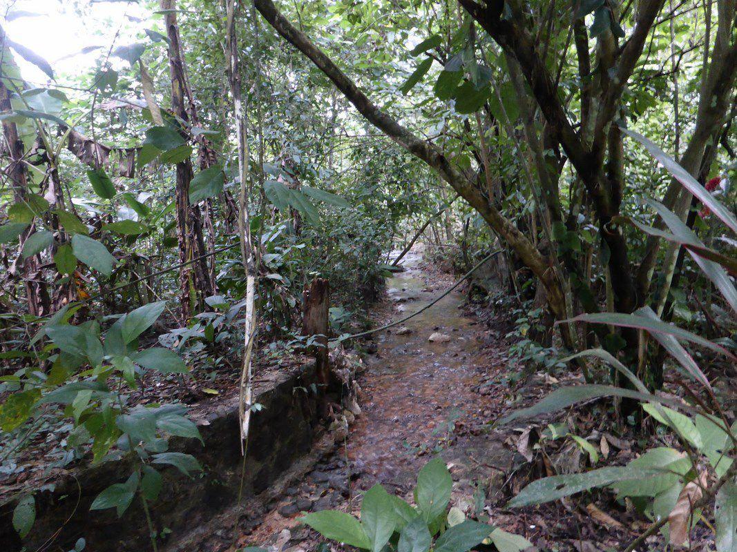 L'art du pliage de serviettes au cœur de la jungle