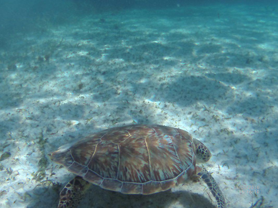 Une superbe tortue ... et des grenouilles !