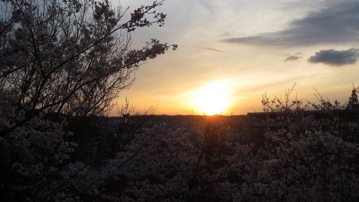 Kyoto s'endort sous les cerisiers en fleurs