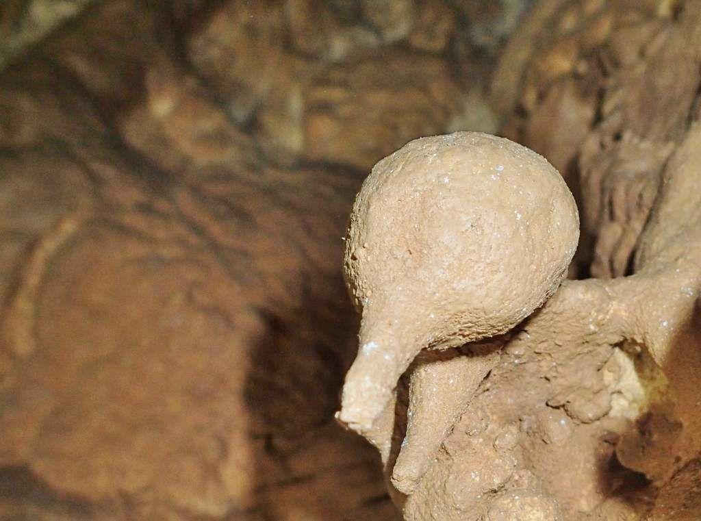 RUDISTE (VACCINITES GIGANTEUS DU CONIACIEN:= 87 million d'années)