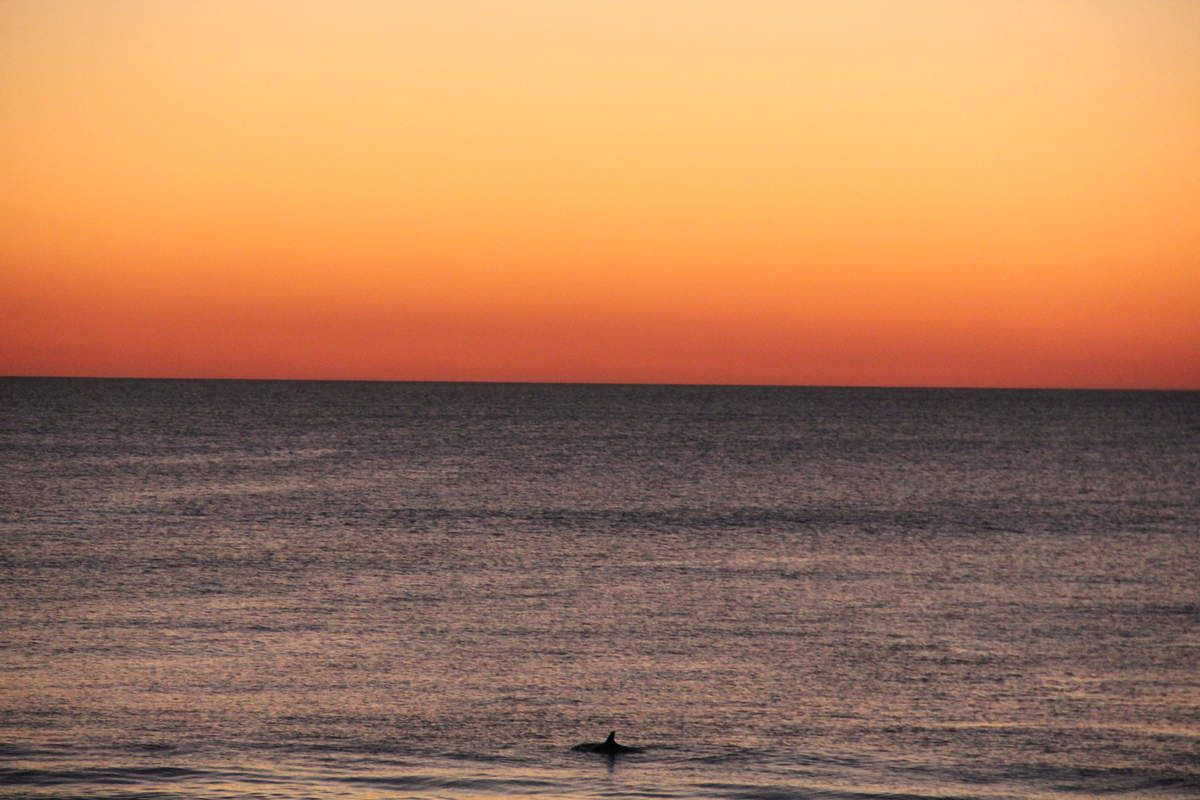 Bunburry sunset with dolphins
