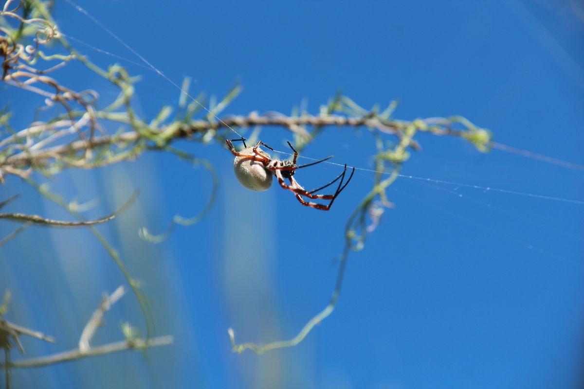 Kalbarri national Park (Natural Windows, Z Bend, The Loop, Ross Graham Lookout)