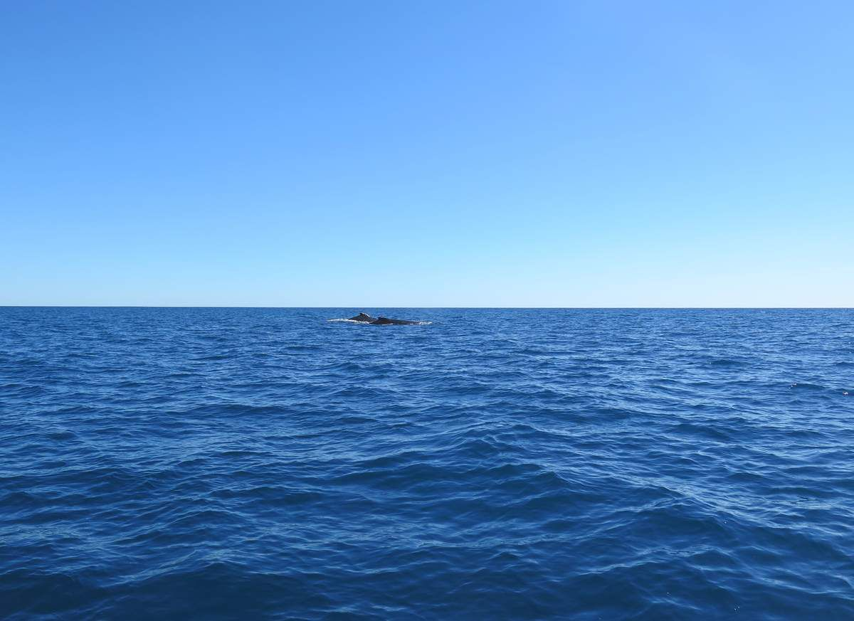 Sortie en mer - Whales