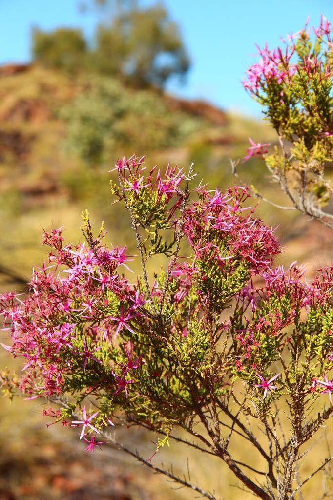 Mirima National Park (Kununurra)