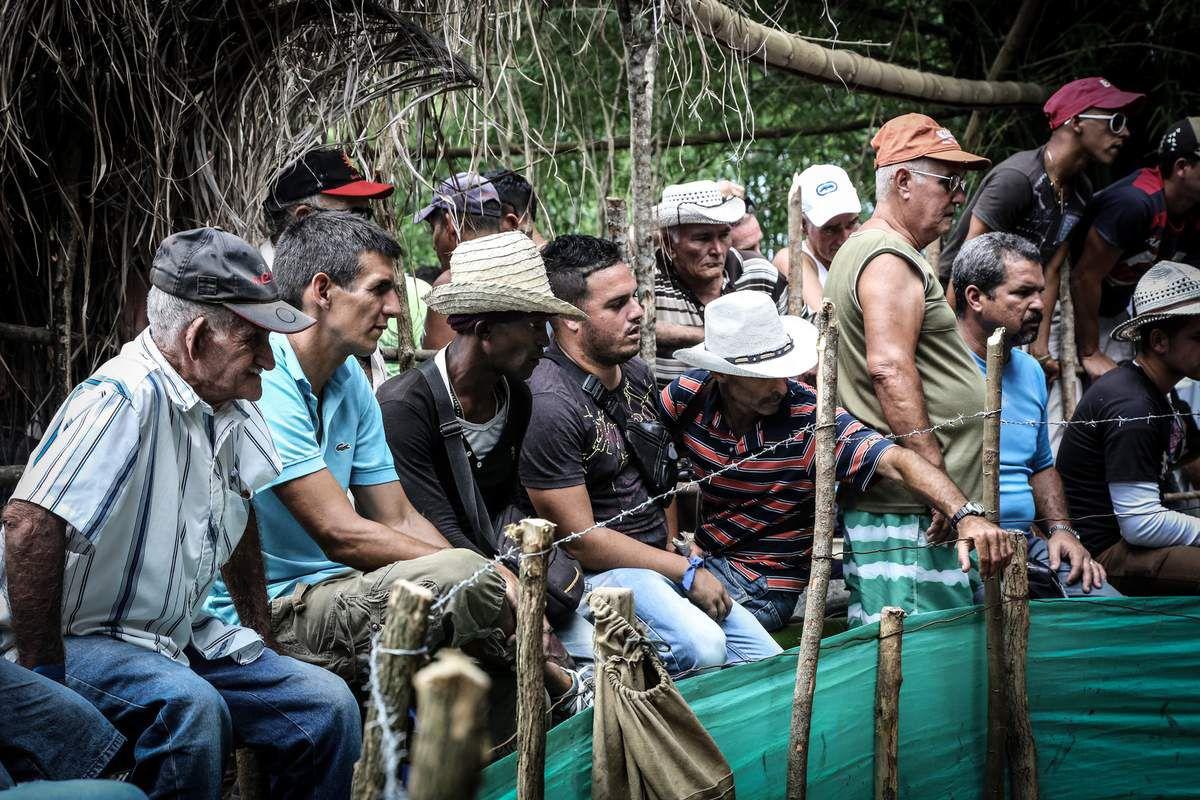 Valla de Gallos prohibido... Combats de Cogs dans la campagne de Cienfuegos.