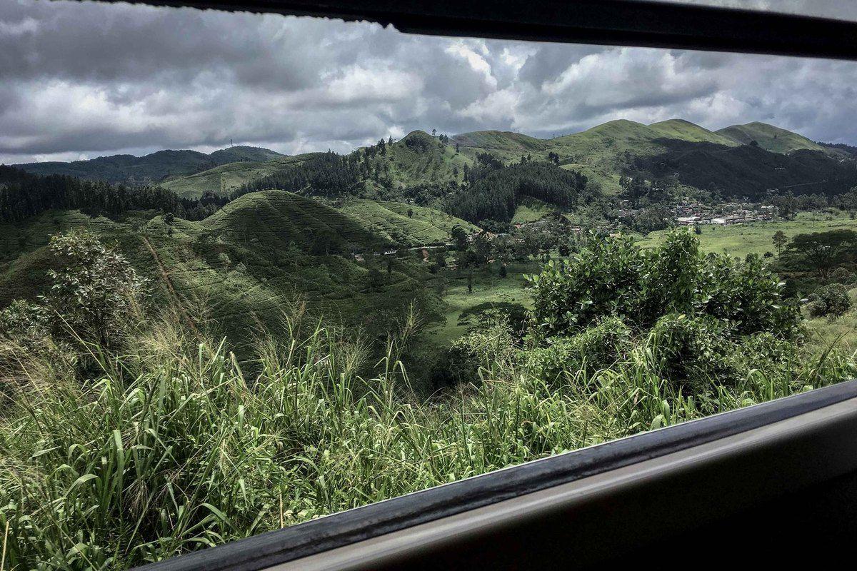 Sigiriya et l'Adam's peak  -Kandy et son jardin botanique -Adam's peak à 5000 marches-Ella et ses plantations de thé...