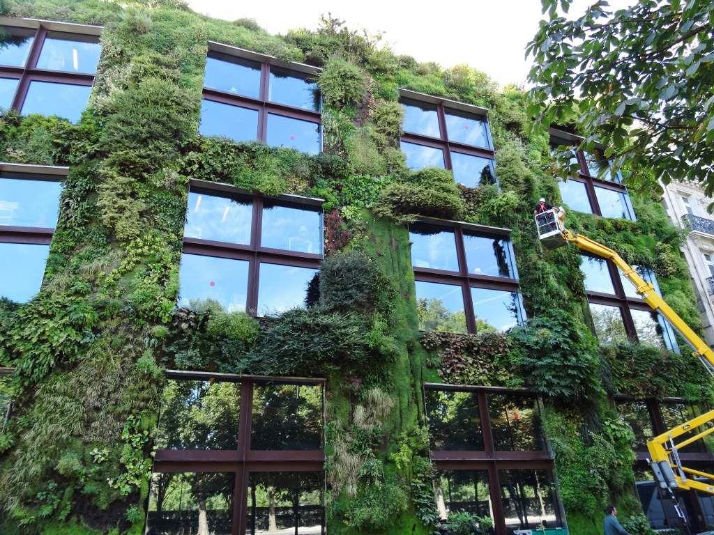 La végétation couvre la façade du musée