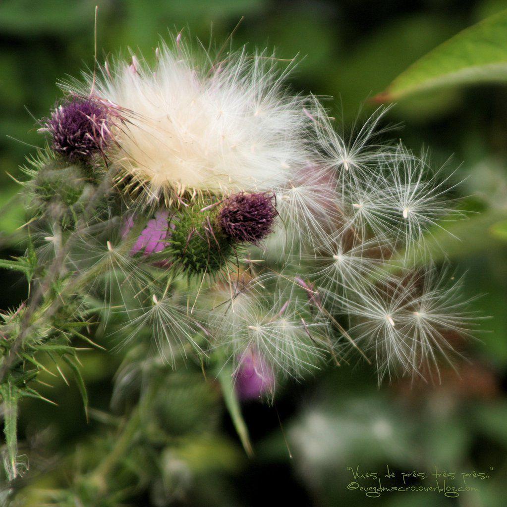 #flowerpower2015 - Opus 15