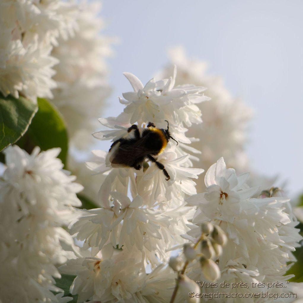 Petites fleurs et petites bêtes..