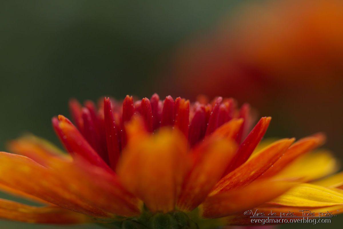 Rêve Orange... ou les Feux de l'Automne..