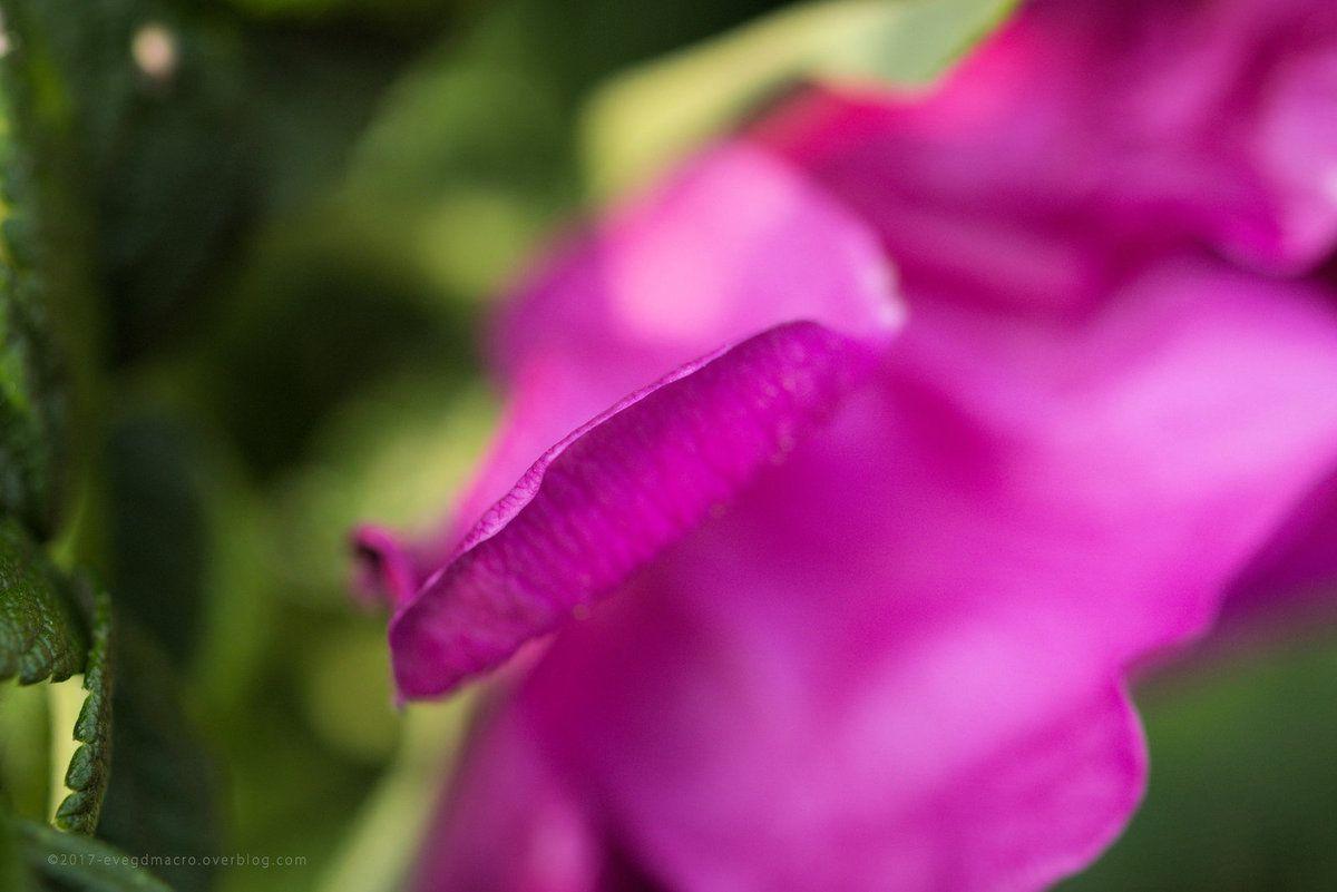 Tellement roses !