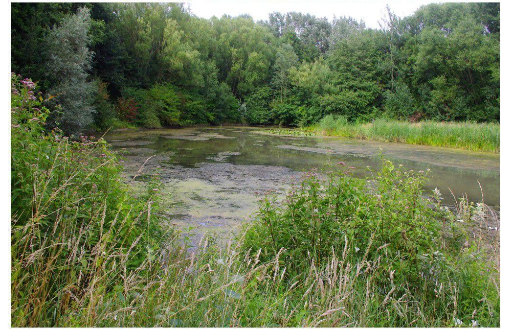 Le parc du Héron à Villeneuve d'ascq