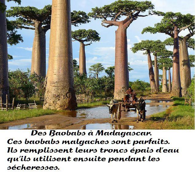 Etrangetés de la nature - Images de quelques arbres