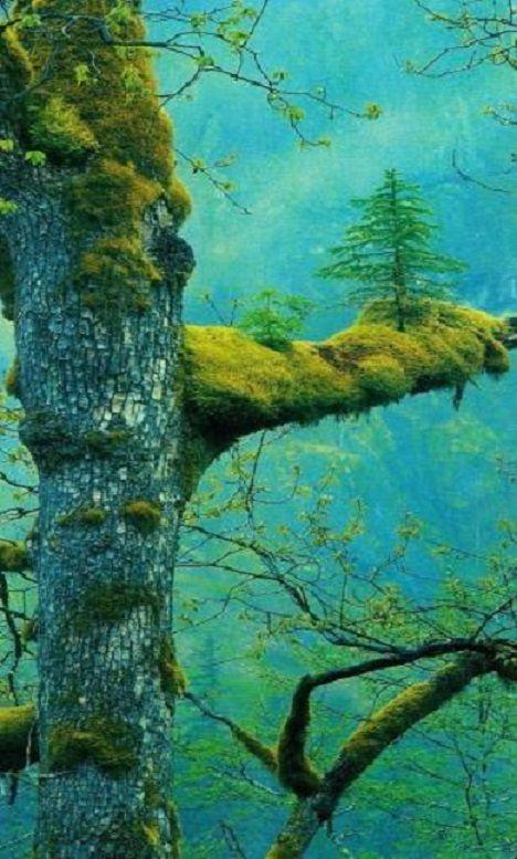 Etrangetés de la nature
