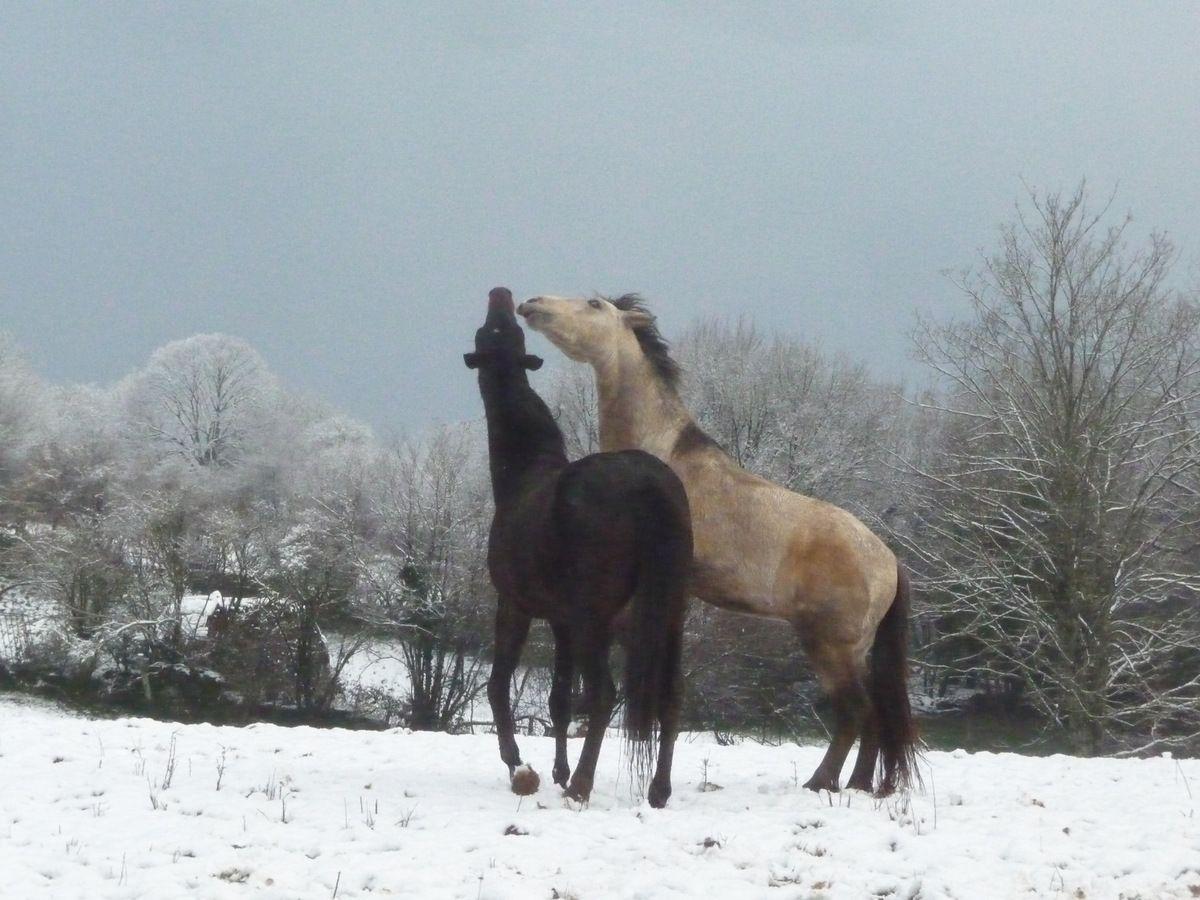 parade amoureuse sur la neige ce matin,