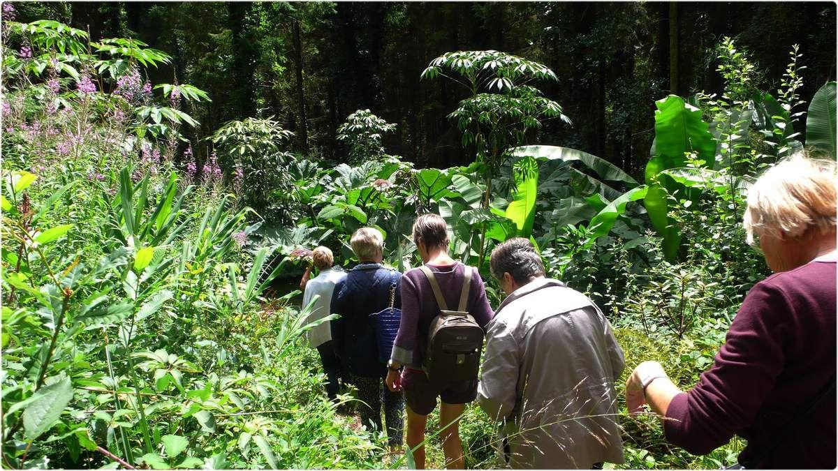 Voyage 2017 à Shamrock et au Jardin Jungle Karlostachys