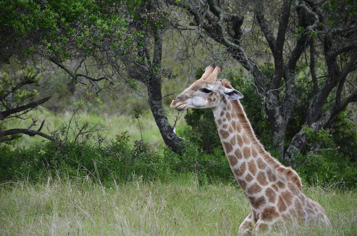 Animaux de Plettenberg Bay Game reserve (il y a aussi des rhinocéros, antilopes, ...)