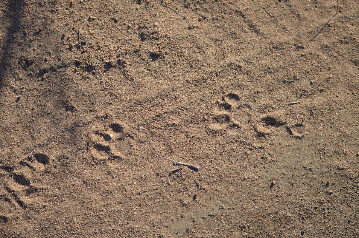 Afrique du Sud 2016 : Kruger - projet de conservation / Kruger area - conservation project