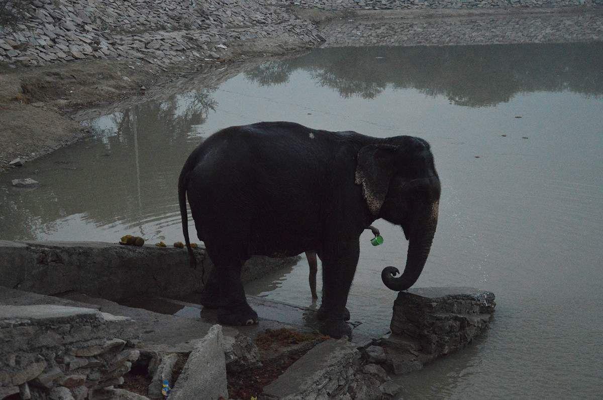 Inde 2017: les élephants du tourisme et Wildlife SOS rescue center