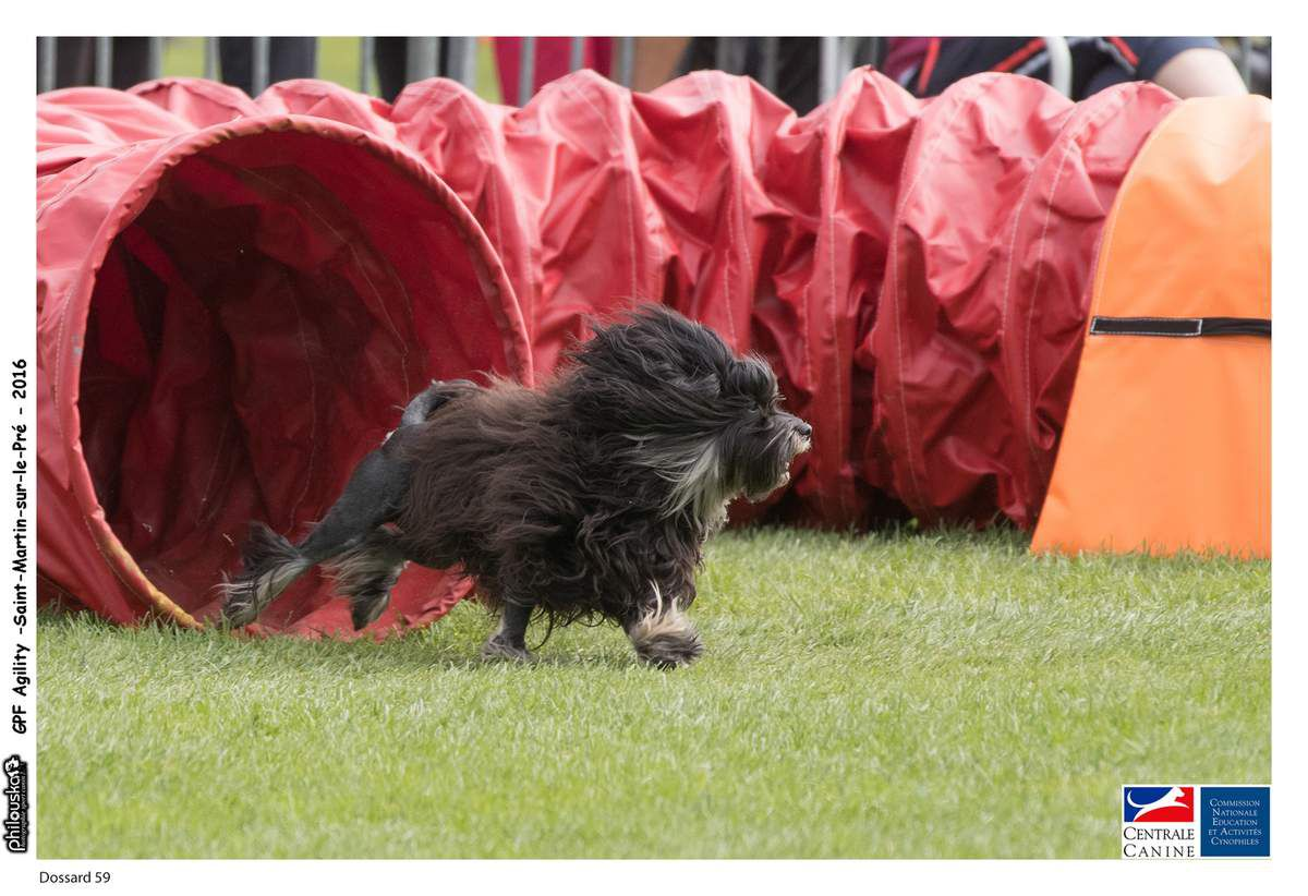 Etonne moi petit chien lion agility finale GPF 2016