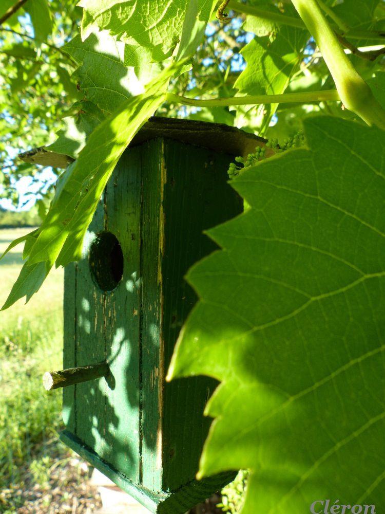 De BO nichoirs pour abriter les mésanges