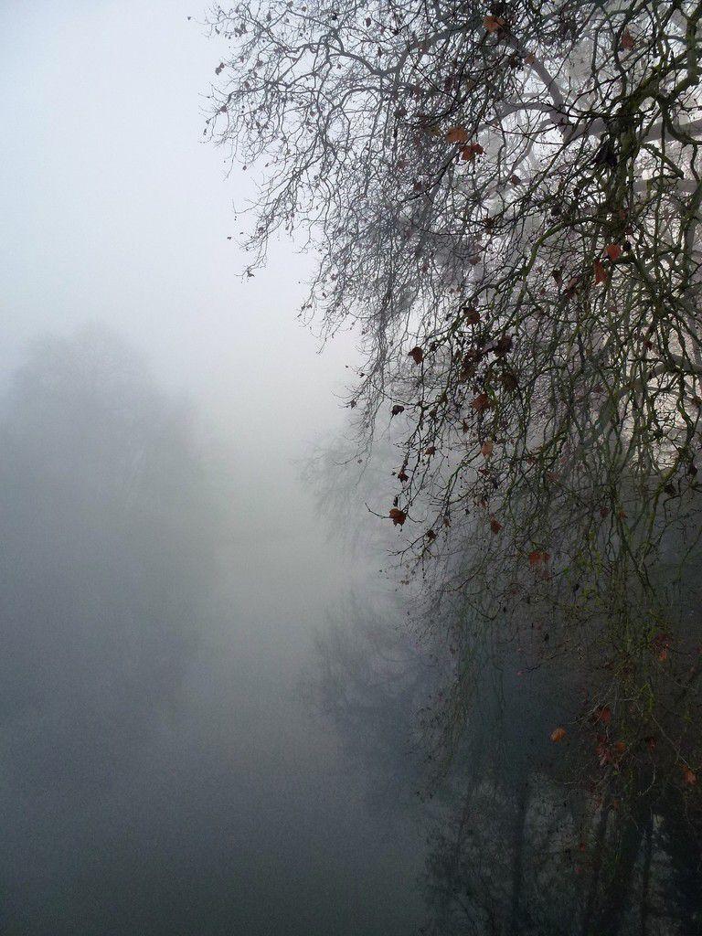 Brouillard d'automne