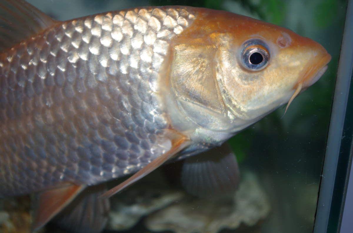 Avril 2015 : thème les poissons