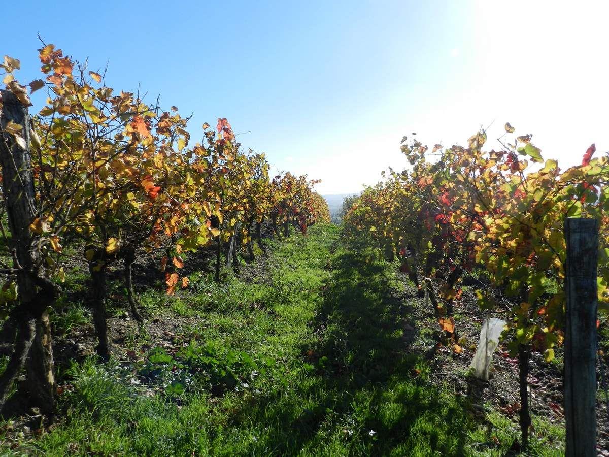 2015 La ronde des vins de Lisle sur Tarn