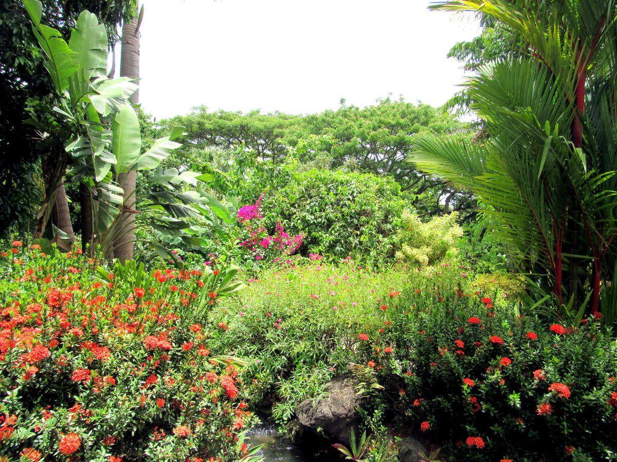 Balade dans le jardin botanique de deshaies for Dans le jardin