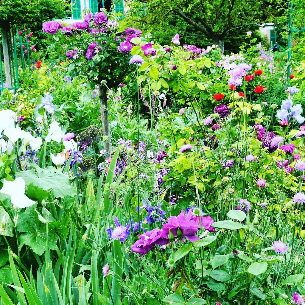 Alliums, roses, iris, giroflées dans des tons assortis de violet