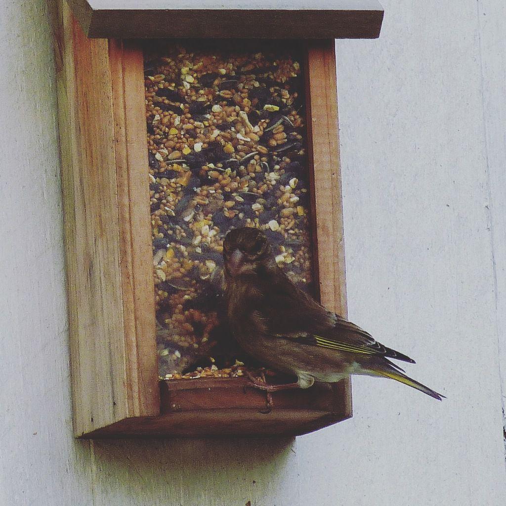 Oiseaux!!
